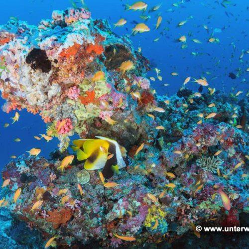 Milaidhoo-Maldiven_17_11g