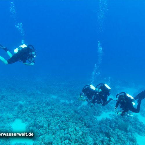 orca_14_red_sea_silence_08g