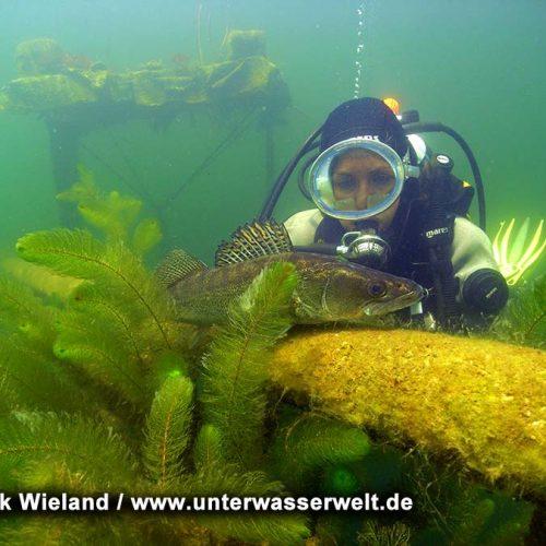 Wieland_08_meissen_07g