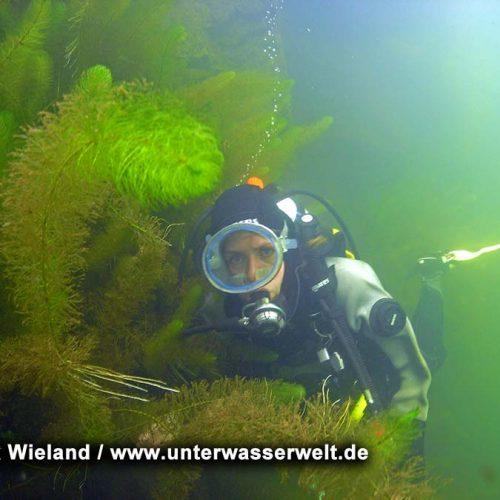 Wieland_08_meissen_12g