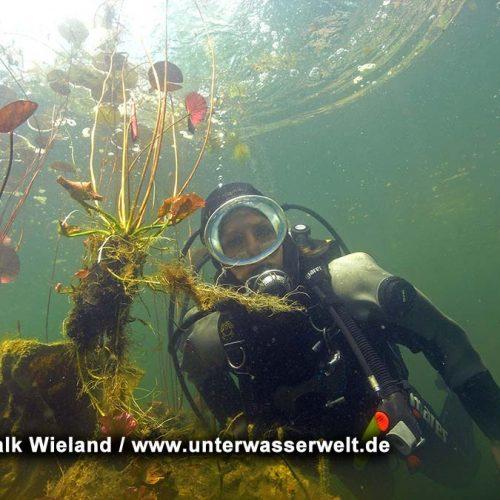 Wieland_08_meissen_16g