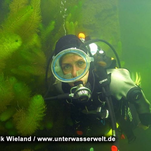 Wieland_08_meissen_17g