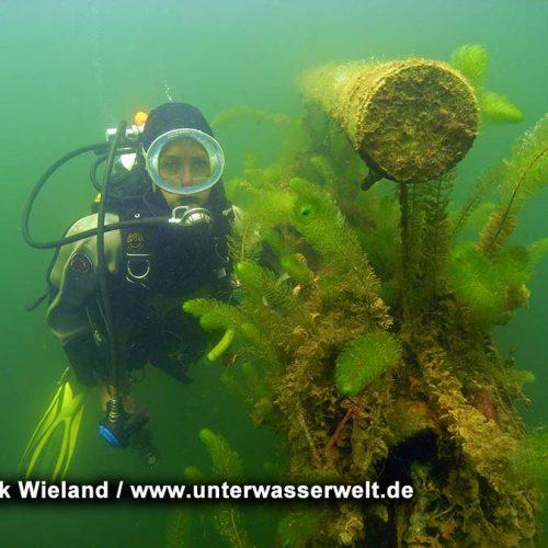 Wieland_08_meissen_18g