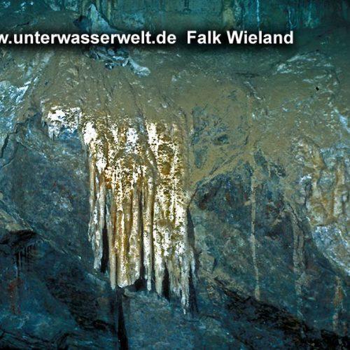 Wieland_08_mittiz_11g