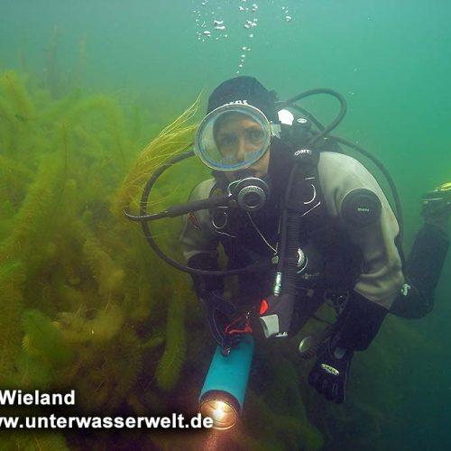 wieland_09_ammelshain_11g