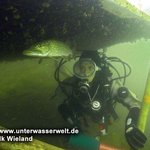 wieland_10_straussee_10g